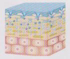 ②角質内で棘状の部分のヒアルロン酸が、最大5時間かけゆっくり溶解しながら角層にじっくりと浸透していきます。
